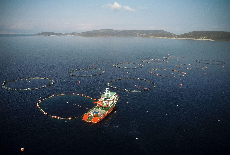 Sea farmings in Turkey's Izmir