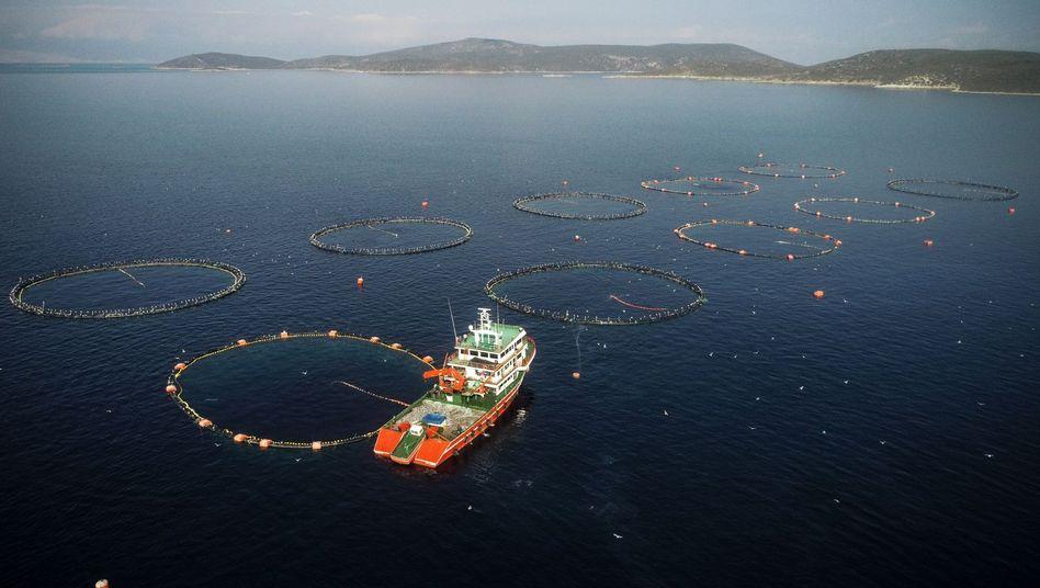 """Aquakultur in der Türkei (Archivbild): """"Sicherstellen, dass für zukünftige Generationen genügend Phosphor verfügbar ist"""""""