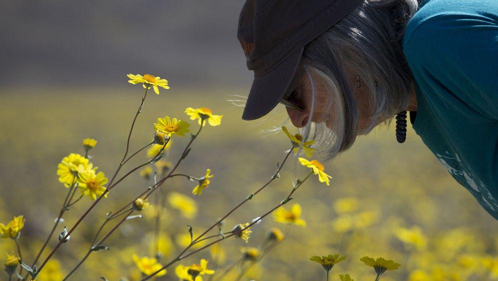 Seltenes Naturphänomen: Das Death Valley lebt