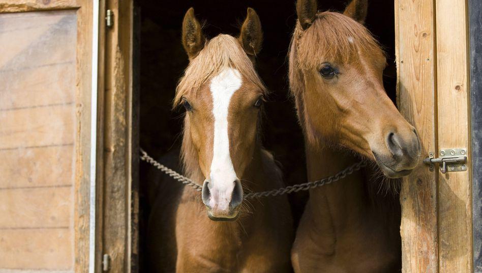 Nachbarschaftsstreit um Pferdehaltung (Symbolfoto)
