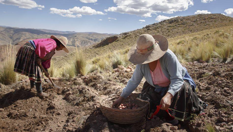 Zwei Bäuerinnen bei der Kartoffelernte in den bolivianischen Anden