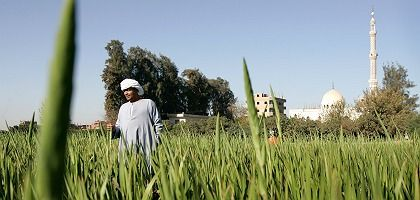 An Egyptian farmer in the Nile valley: Egypt's government wants to create more farmland out of desert.