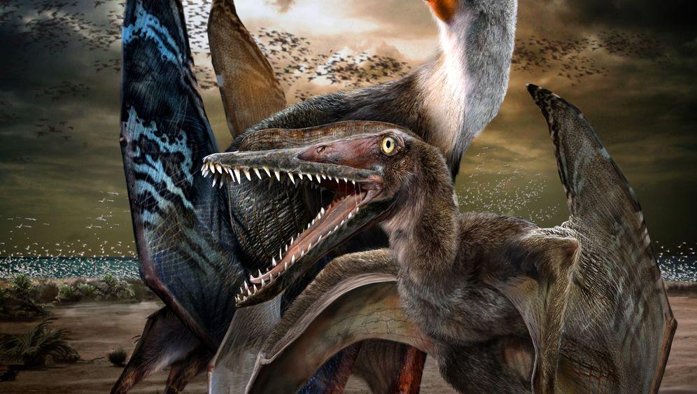 Pterosaurier: Die ersten Brutpfleger?
