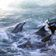 Japan nimmt umstrittene Jagd auf Delfine wieder auf