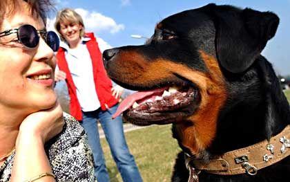 Hund und Mensch: Enges Gespann seit Jahrtausenden, das über Laute kommuniziert