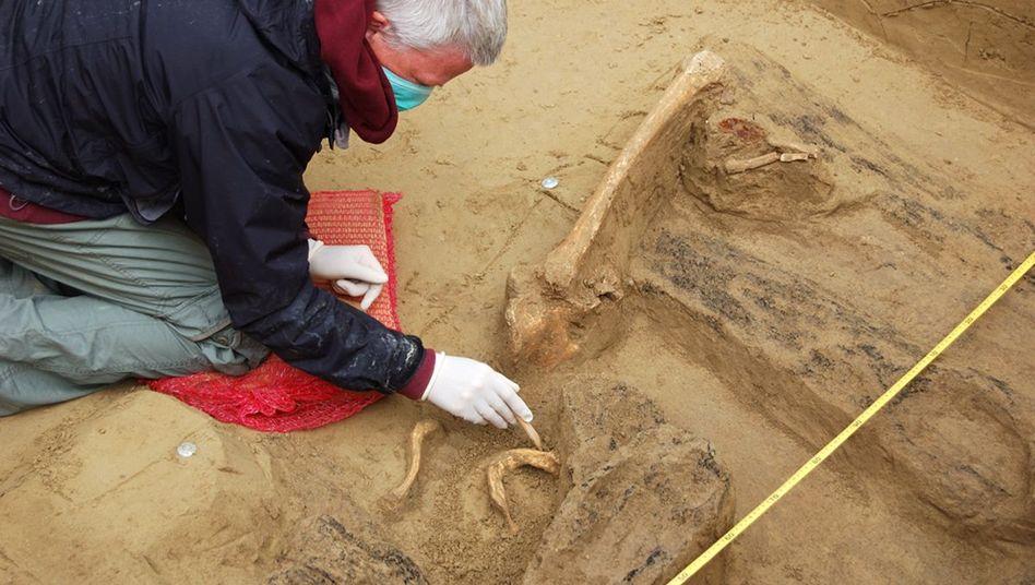 Ausgrabung in Szólád: Spuren schwerer Verletzungen an den Knochen