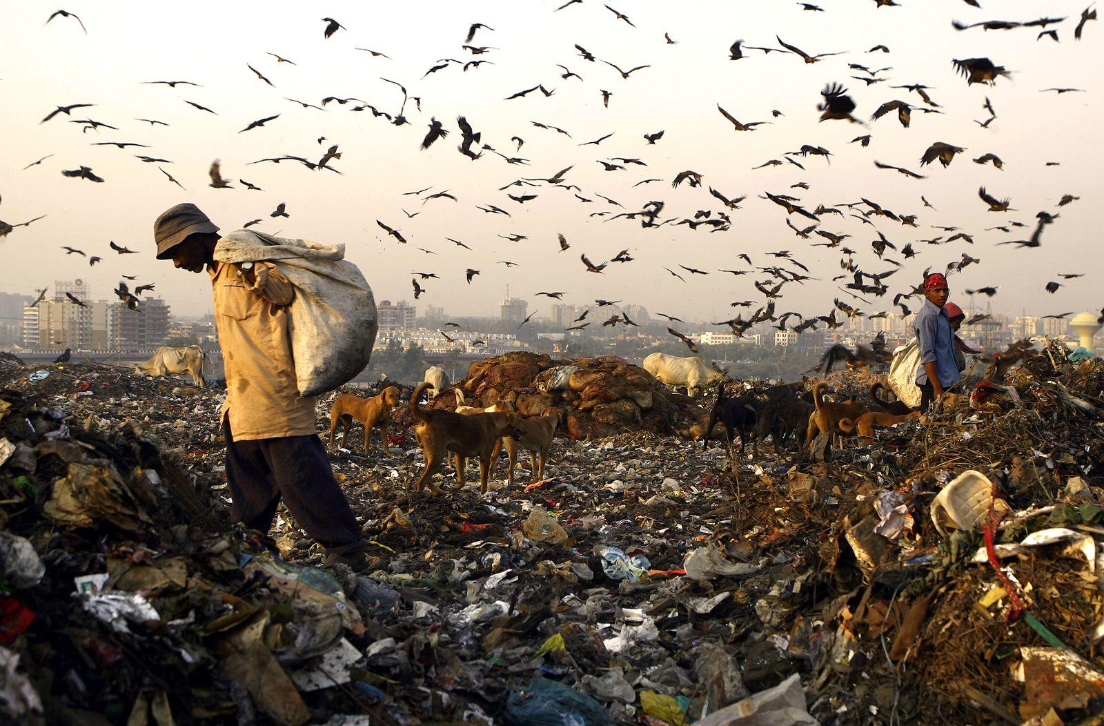 Indien / Mülldeponie