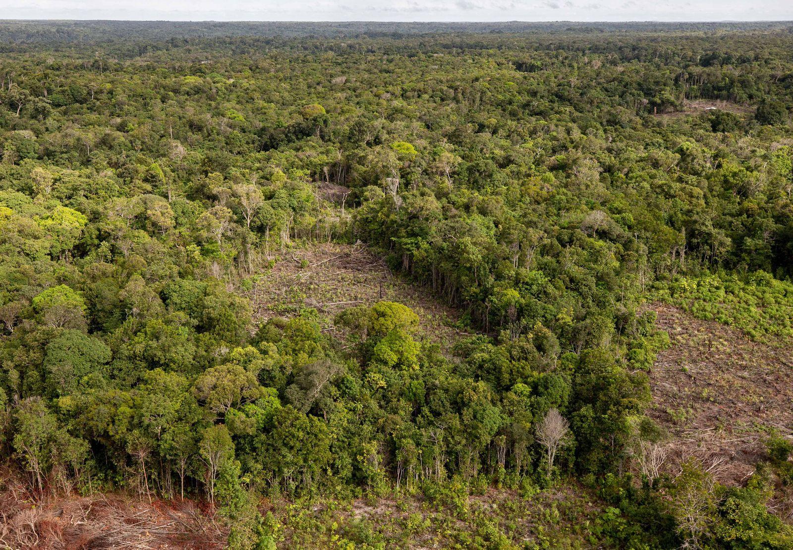 March 3, 2021, Sao Paulo, Sao Paulo, Brazil: Illegal deforestation in the Amazon rainforest in the upper Rio Negro, in t