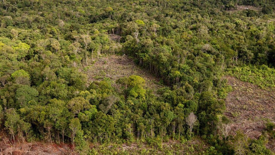 Regenwald im Amazonasgebiet von Brasilien
