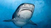 Mann stirbt nach Haiangriff