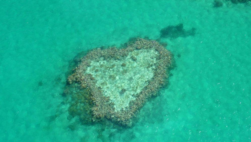 Whitsunday Islands: Korallenherz und quietschender Sand
