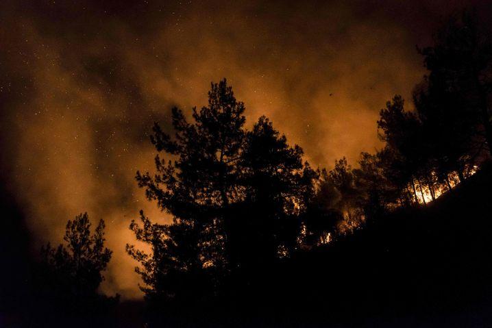 »Wir sind hoffnungsvoll«: Waldbrandbekämpfung mit internationaler Hilfe