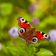 Schmetterlingsfantasien und seltsame Begehrlichkeiten