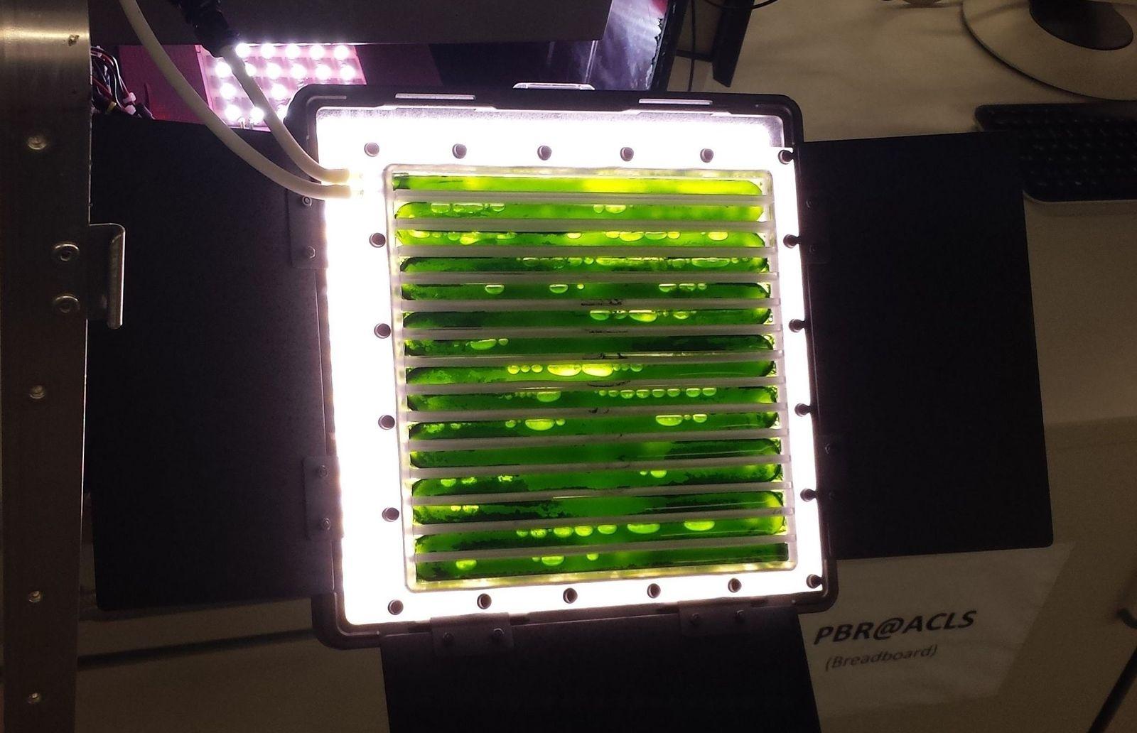 EINMALIGE VERWENDUNG Algen auf außerirdischer Mission
