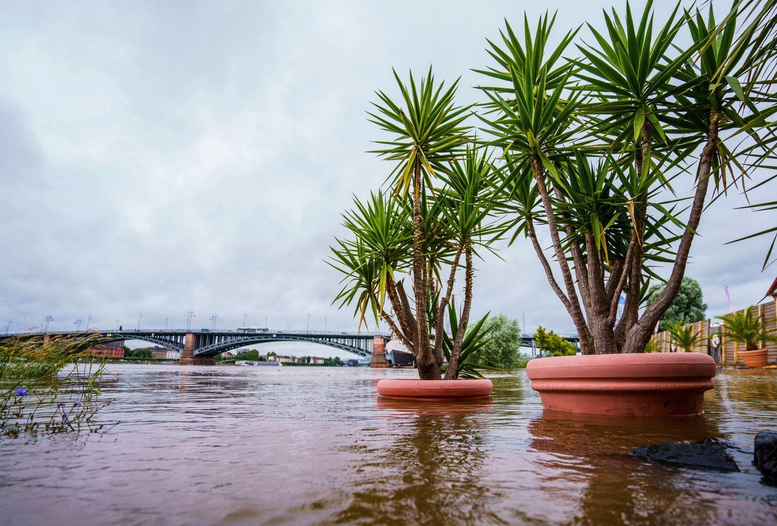 Hochwasser in Mainz-Kastel