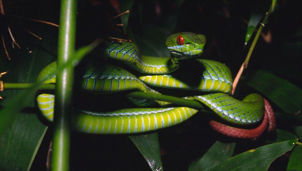 Biologie: Neue Arten aus Thailand, Kambodscha und Vietnam