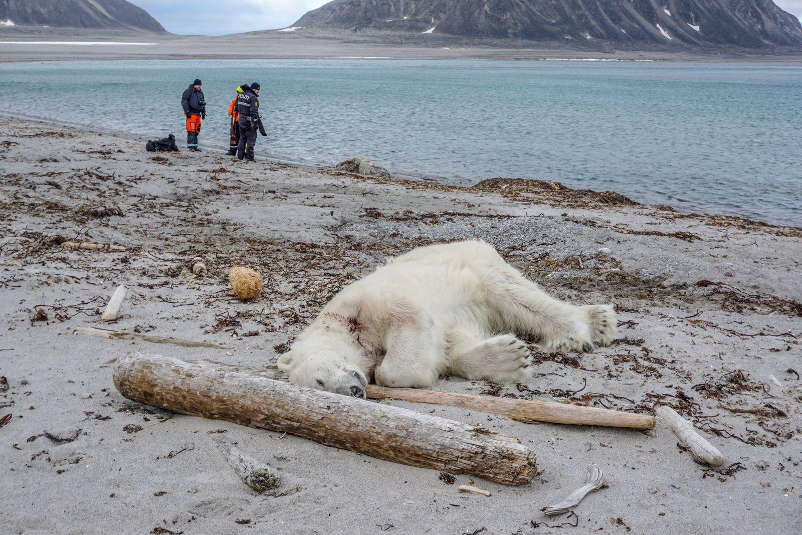 Polarbärenangriff auf Spitzbergen