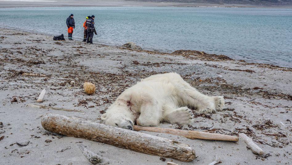 Von Kreuzfahrt-Eisbärwächtern getöteter Eisbär