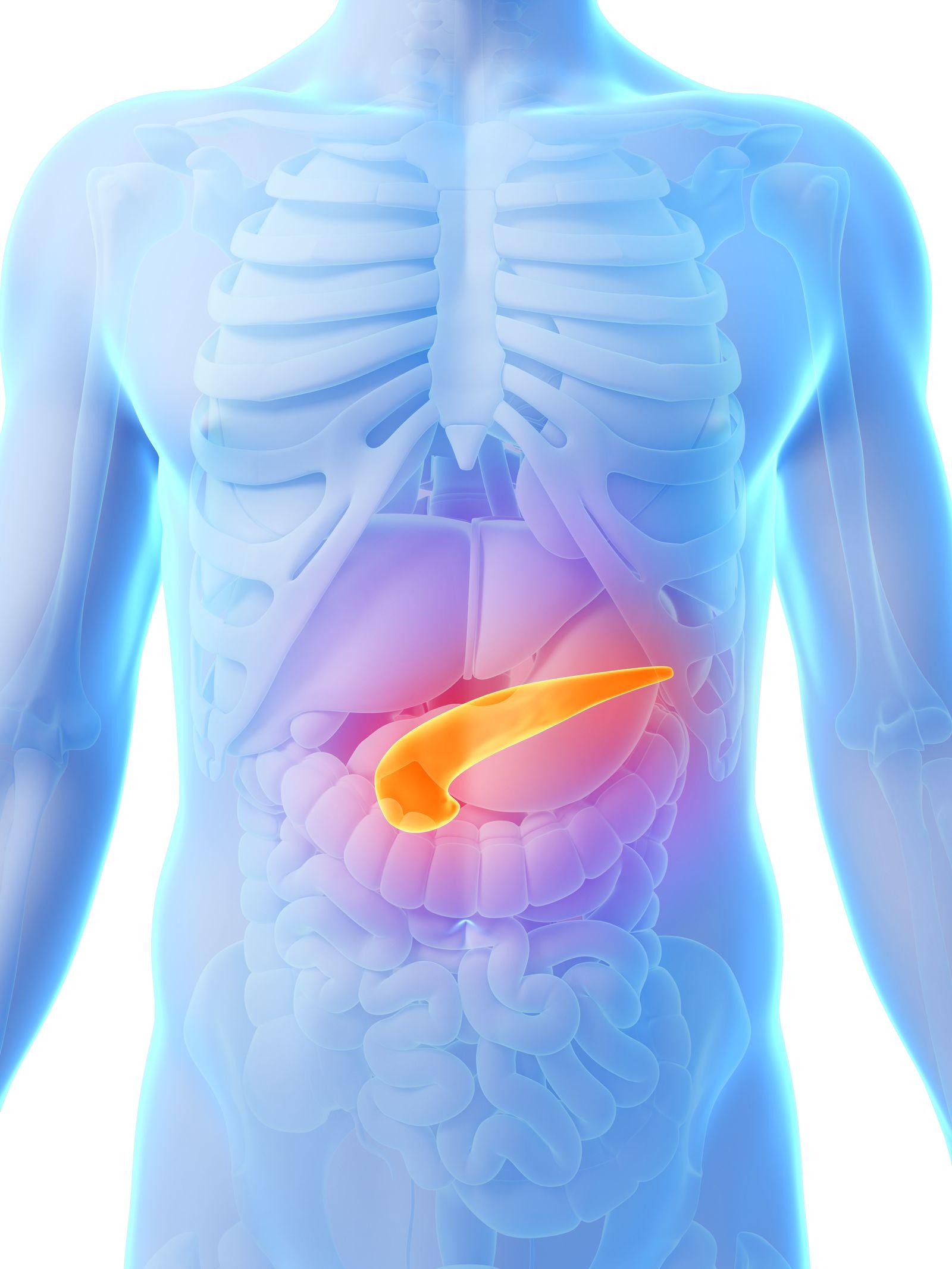 EINMALIGE VERWENDUNG Pancreas