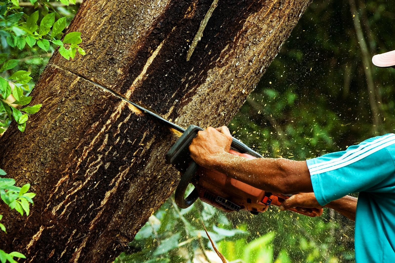 Chainsaw in the rain forest.