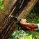 Afrika überholt Südamerika bei Abholzung