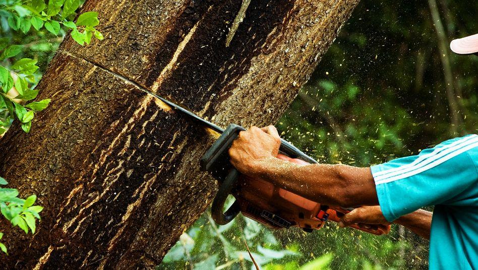 Jedes Jahr verschwinden zehn Millionen Hektar Wald