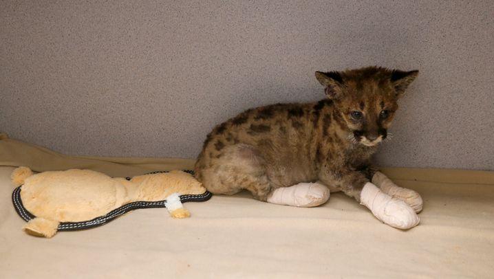 Puma-Baby