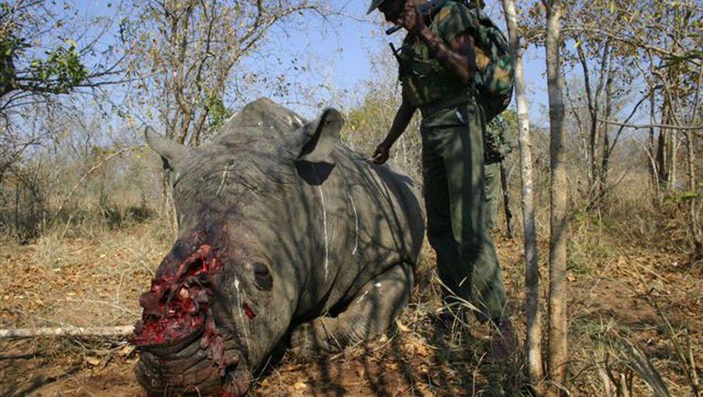 Afrika: Das blutige Geschäft der Wilderer