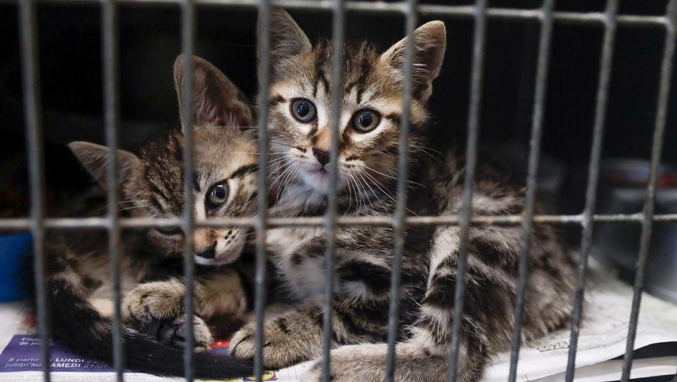 Katzen in einem Tierheim