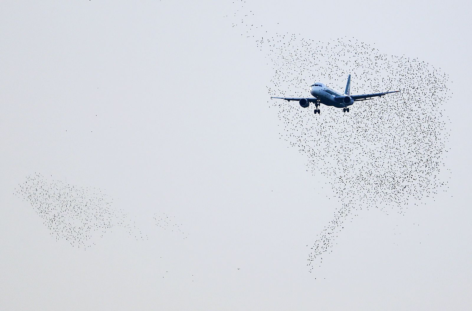 Flughafen/ Tiere/ Vögel