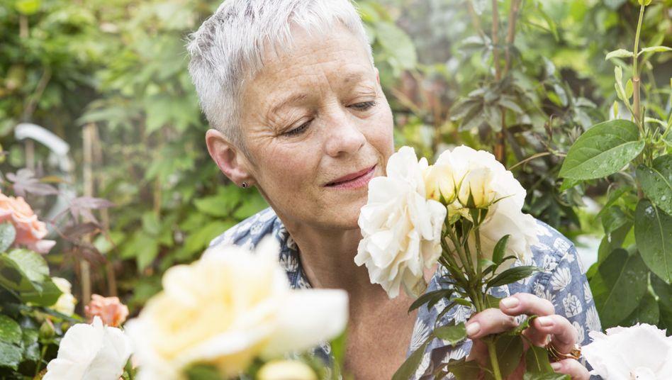Eine Rose ist eine Rose - aber riecht sie auch so? Wer den Geruch nicht mehr wahrnimmt, stirbt womöglich bald