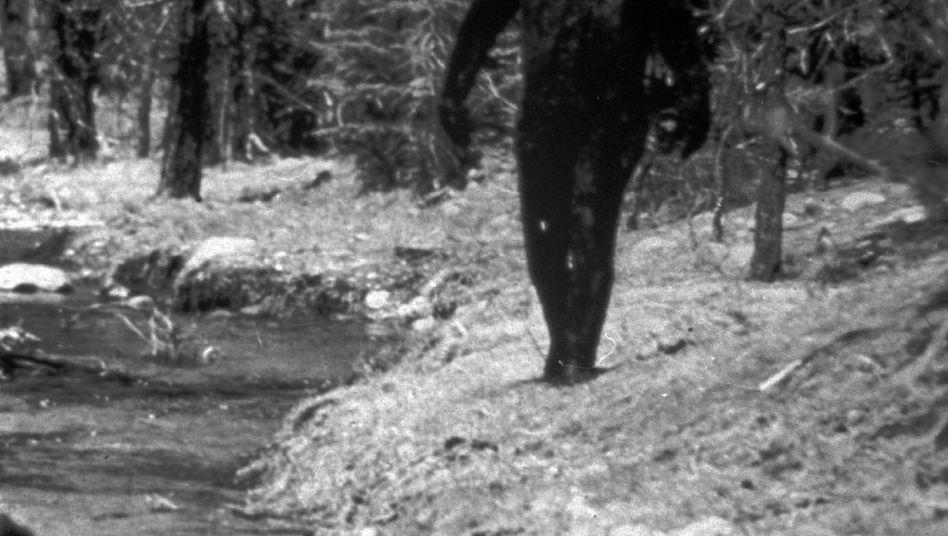 Dieses Bild von 1977 zeigt angeblich den mysteriösen Bigfoot in den Bergen Kaliforniens