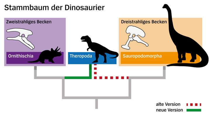 Stammbaum, alt und neu in einem Bild: Die Raubsaurier haben den Ast gewechselt