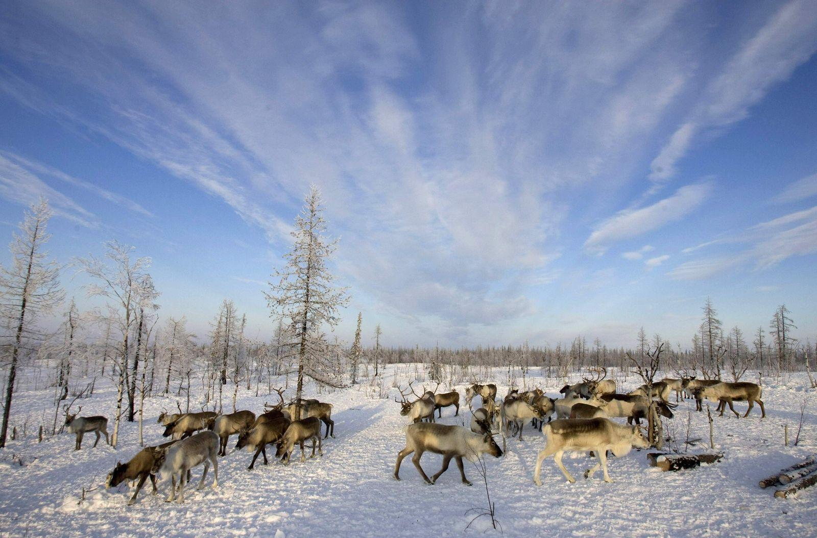 Arktis/Russland