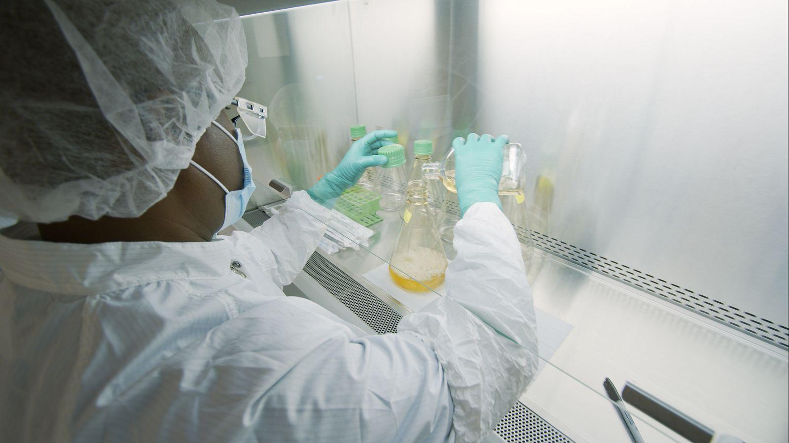 Llly Pharma - Operator manipulating the antibody's nutrient media