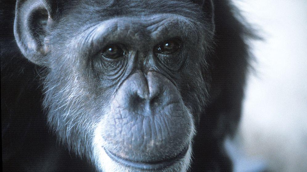 "Sprechende Primaten: ""Bitte kitzeln"""