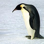 Pinguin: Nach Meinung der CSU ist sorgfältig zu prüfen, ob man Linux eingemeinden sollte