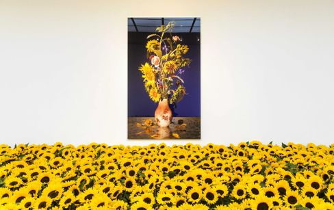 Ausstellung im Süden Amsterdams: Sonnenblumen als Mahnmal