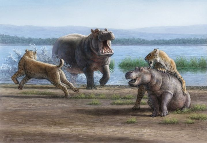 Jungtierjagd: Wurde Smilodon mit tonnenschwerer Beute fertig?