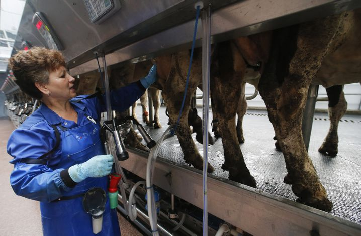 Russische Milchproduktion