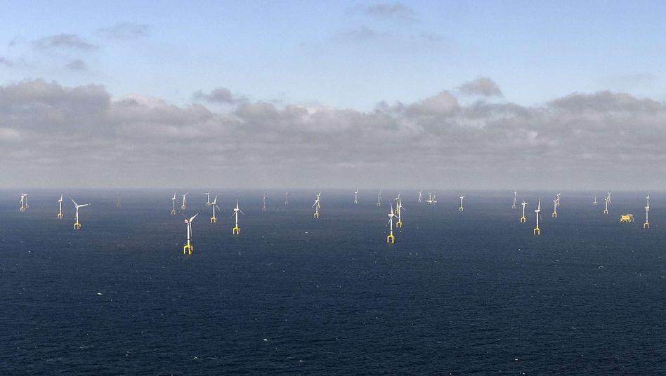 """Windpark """"Bard 1"""" (im August 2013): Fundamente als Lebensraum"""