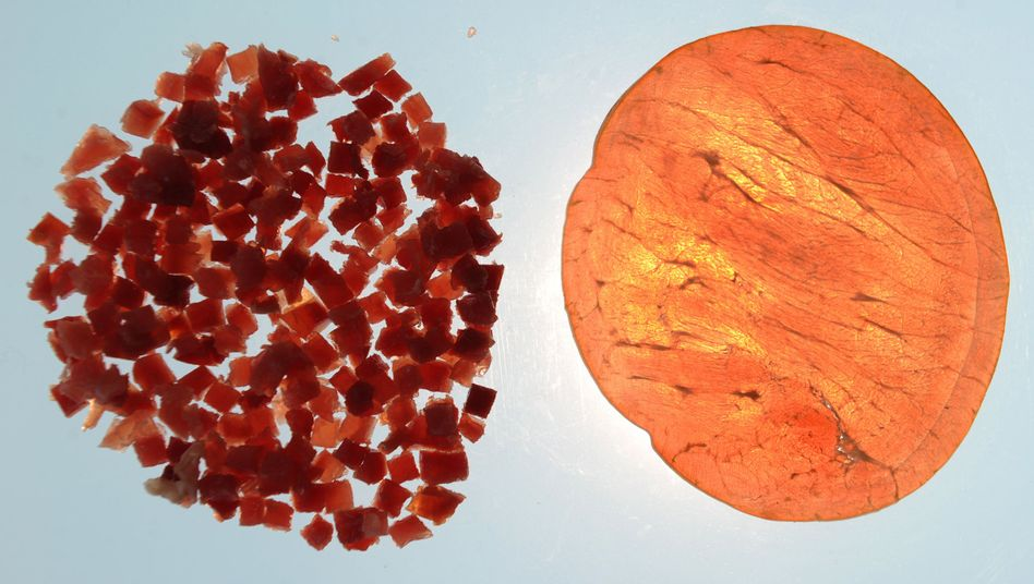 Schinkenstückchen, als Lachsschinken deklarierte Scheibe: Mehrheit gegen Klebefleisch