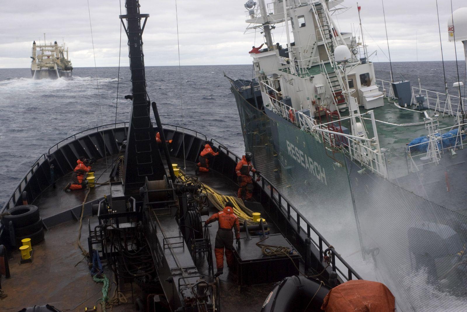 EINMALIGE VERWENDUNG Walfang / Antarktis / Sea Shepherd / Kollision