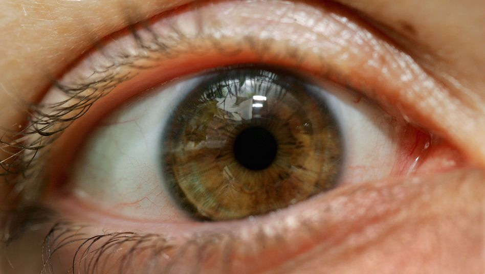 Blickkontakt: Genetische Steuerung