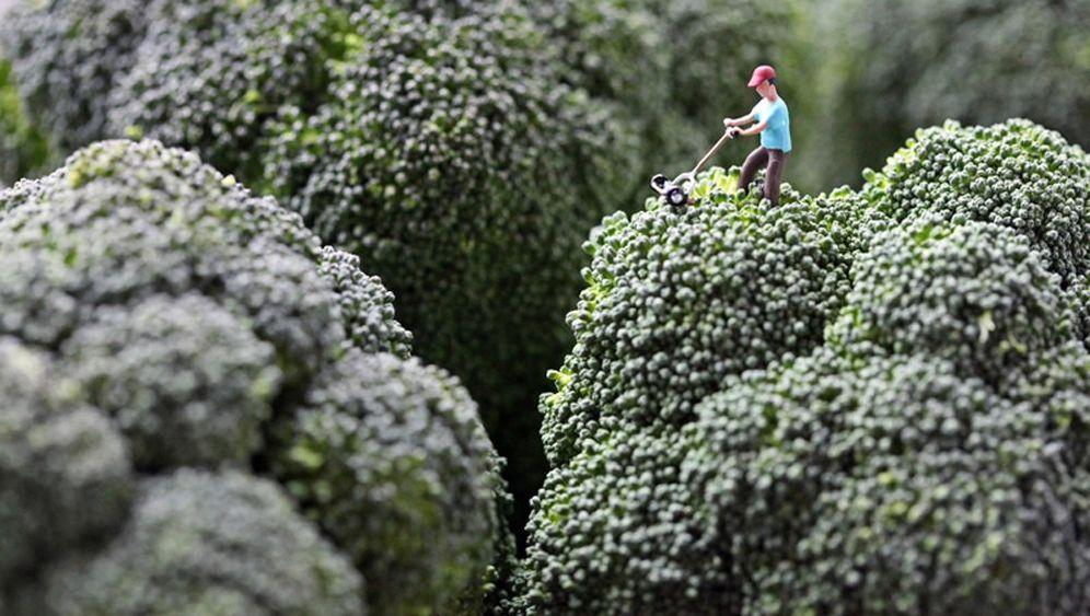 Fotografie: Zwischen Milchseen und Broccoli-Bergen