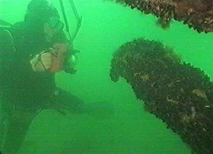 Wrack eines 1902 gesunkenen holländischen Frachtschiffes: Mehr als 2000 gesunkene Schiffe werden in der 12-Meilen-Zone vor der Küste Mecklenburg-Vorpommerns vermutet
