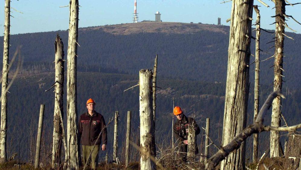 Waldsterben: Die Rächer der Entlaubten