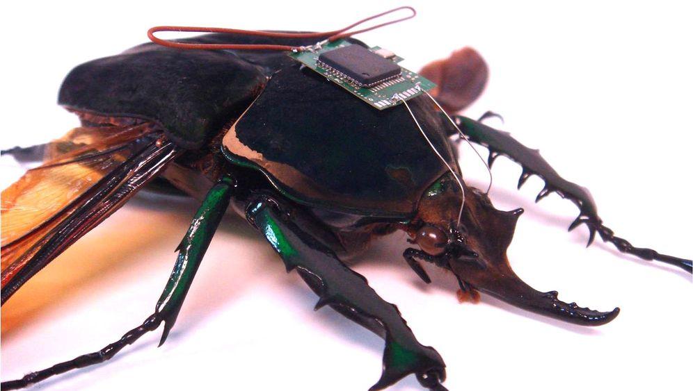 Insekten: Militär forscht an fliegenden Cyborgs