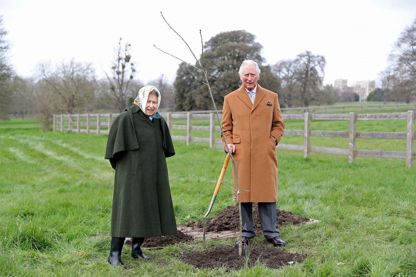 «Grüner Baldachin»: Aufruf zum Bäumepflanzen vor Queen-Jubiläum