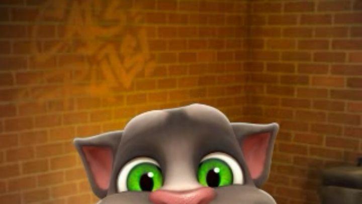 Auf WhatsApp beliebte Katze